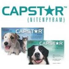 Capstar Flea Treatment